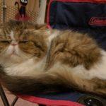 猫カフェの眠り猫たち。癒しの写真館