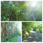 都心から70分の超穴場のハイキングスポット「藤野」で、森林浴とアートを満喫しよう!